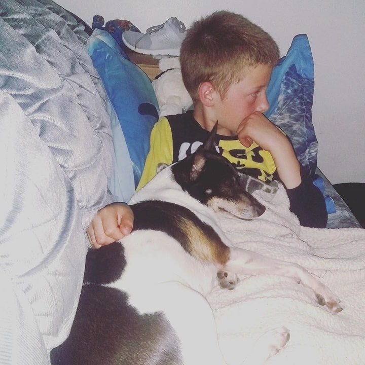 Rat Terrier does well with older children