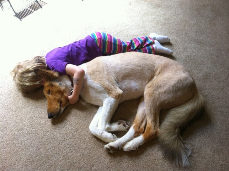 Saluki Are More Suitable For Older Children