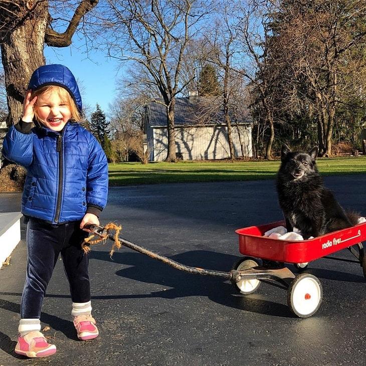 Schipperke is child-friendly