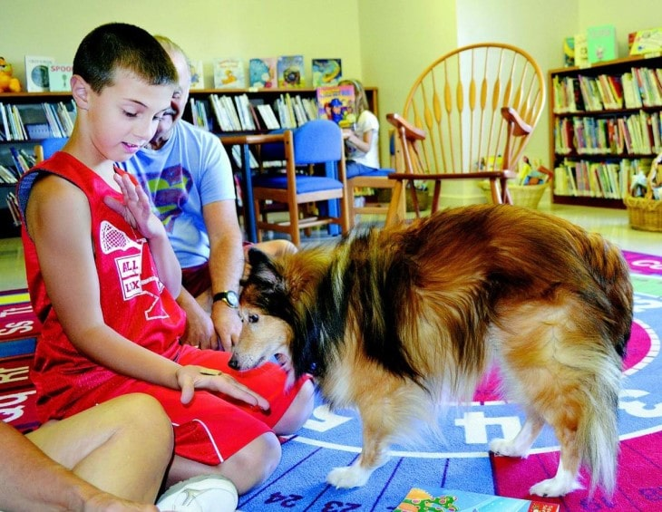 Shetland Sheepdog Is Well Going with Children If Raise Together