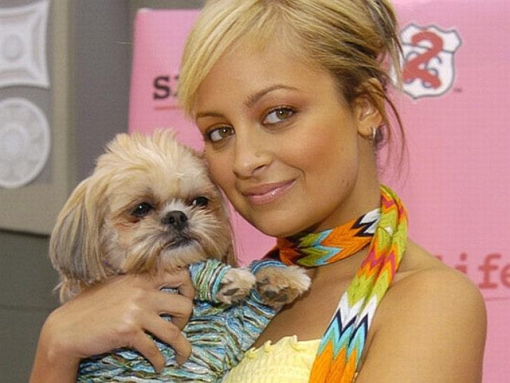 Shih Tzu  With Nicole Richie