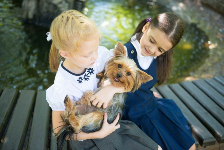 Silky Terrier Are Easygoing With Kids