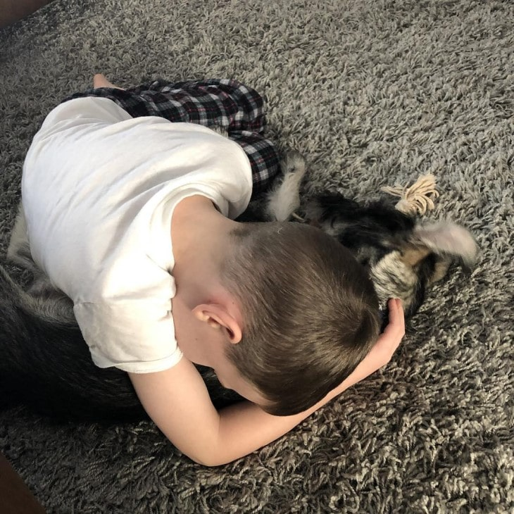 Standard Schnauzer Is Well With Children.