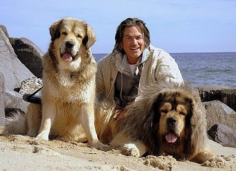 Wayne Scot Lukas with his two Tibetan Mastiff
