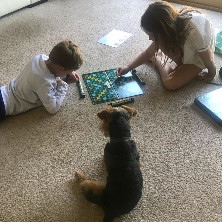Welsh Terrier Is Good With Kids.