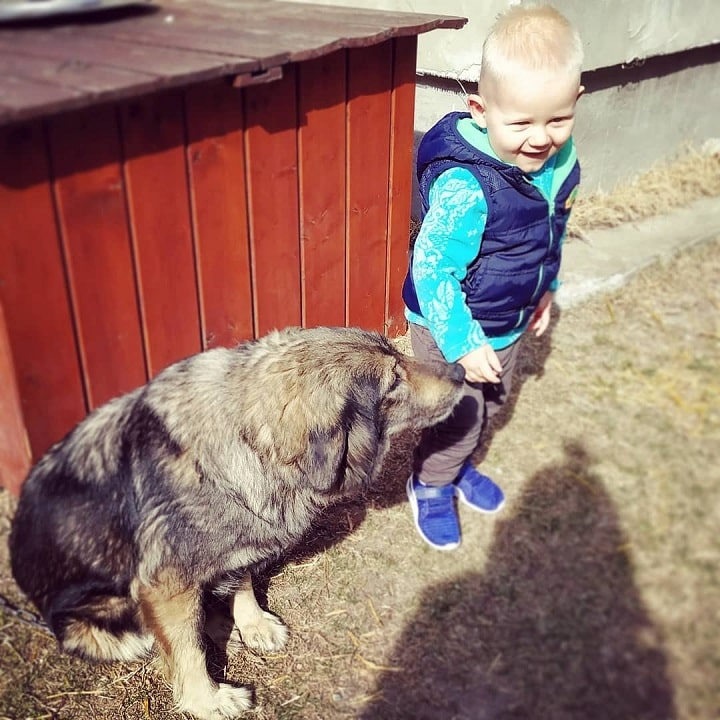 A Baby Boy With Yugoslavian Shepherd