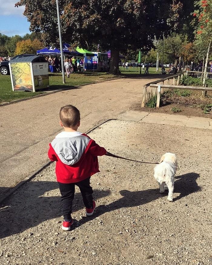 A boy taking Cavachon on the walk