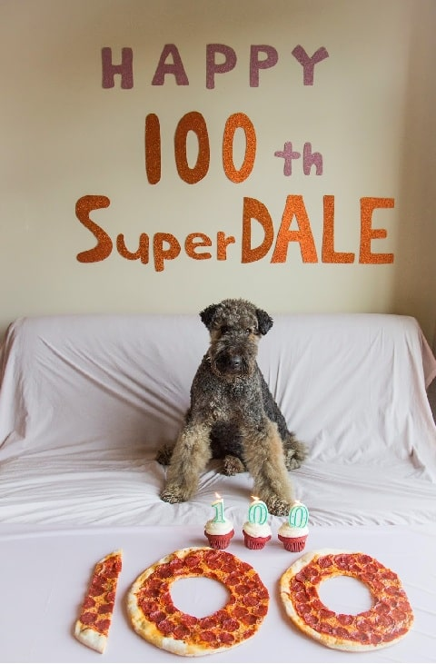 Airedale Terrier celebrating its birthday with delicious treats