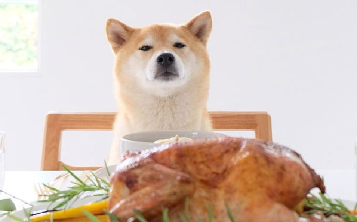 Akita in front of the Chicken