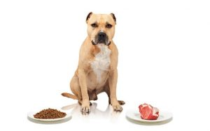 American Staffordshire Terrier dog food and supplements