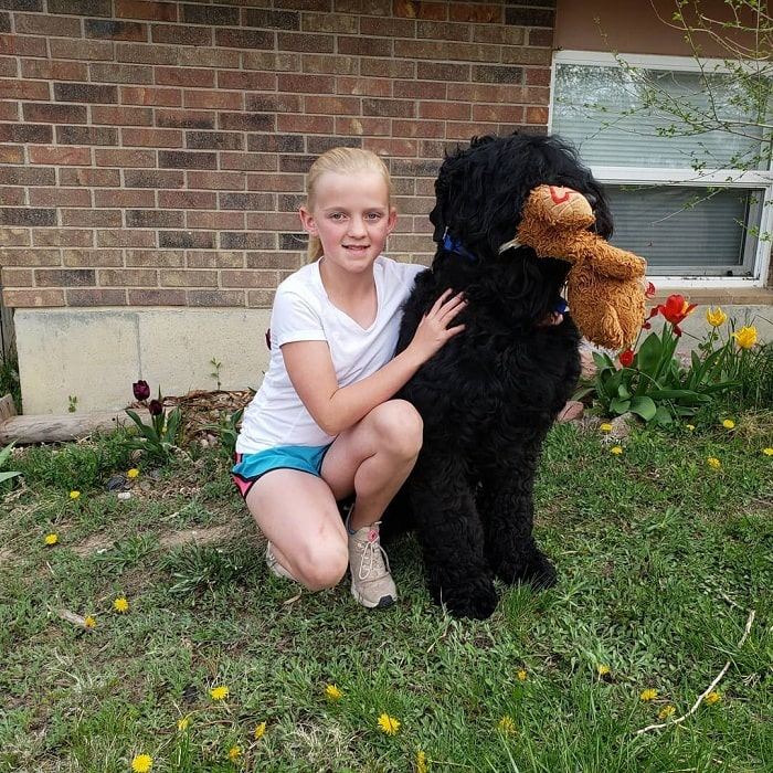 Black Russian Terrier posing with a older girl