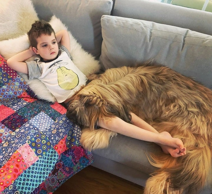 Briard relaxing with a boy