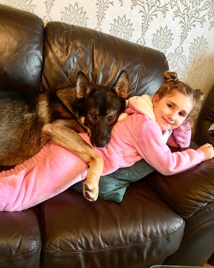 Gerberian Shepsky laying with a baby girl