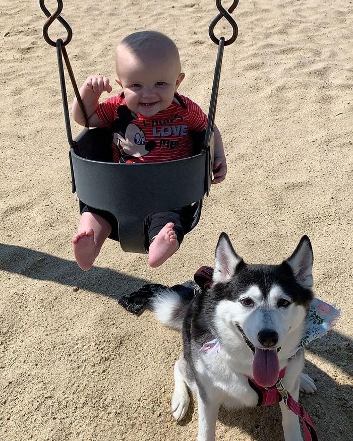 Huskimo playing with a baby
