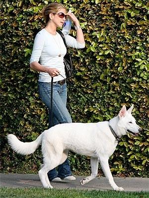 Jennifer Aniston with her White German Shepherd