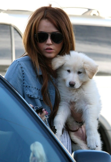 Miley cyrus with her White German Shepherd puppy