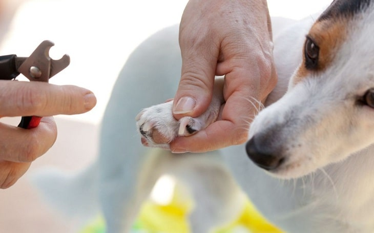 An owner clipping her dog's nails.