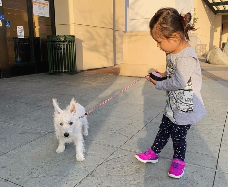 West Highland White Terrier Is Gentle With Kids.