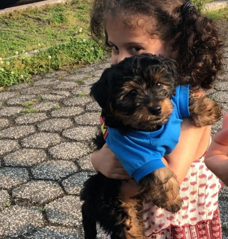 Yorkie Poo Is Friendly With Kids.
