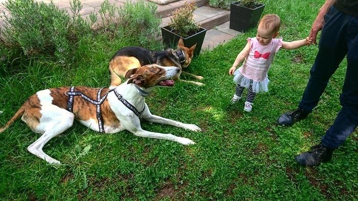 a baby in a garden with Polish Grayhound