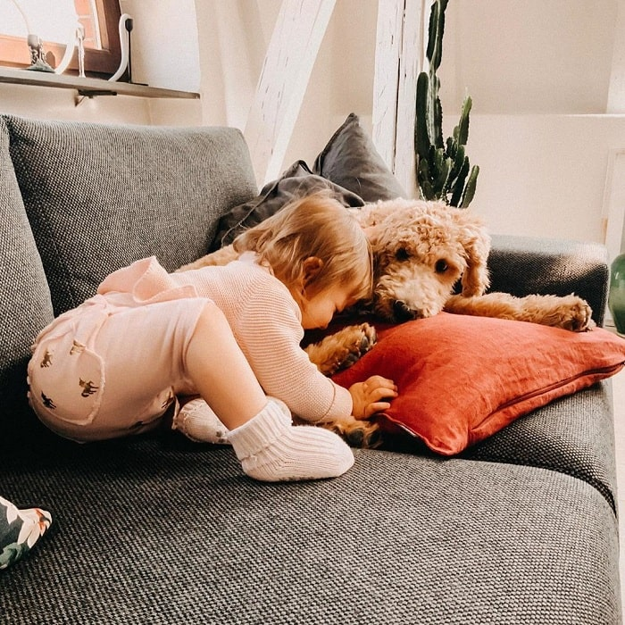 A baby and Goldenpoodle cuddling