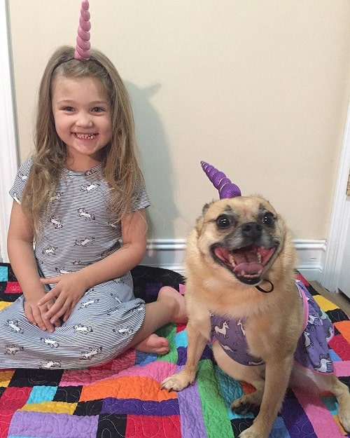 A girl and a Pom-A-Pug wearing a unicorn horn hat