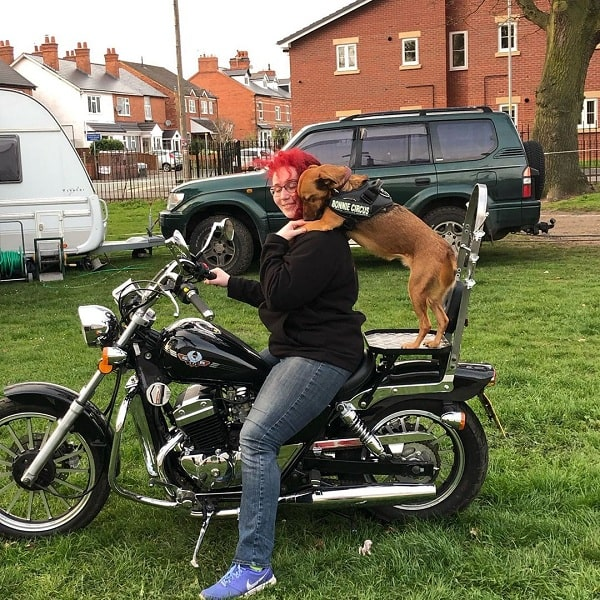 A mongrel going on a ride with its master