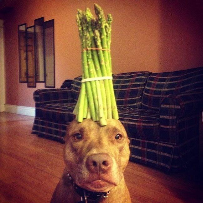 Asparagus in dog's head