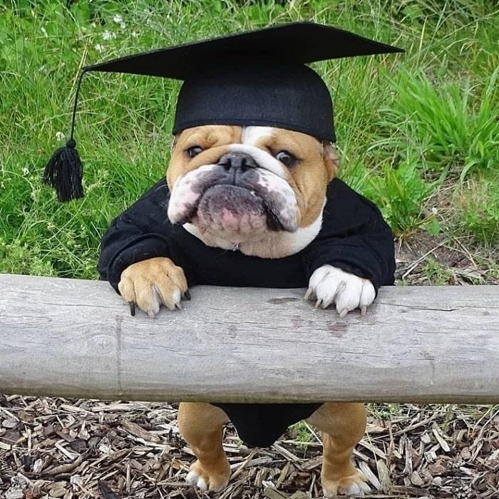 Bulldog just graduated