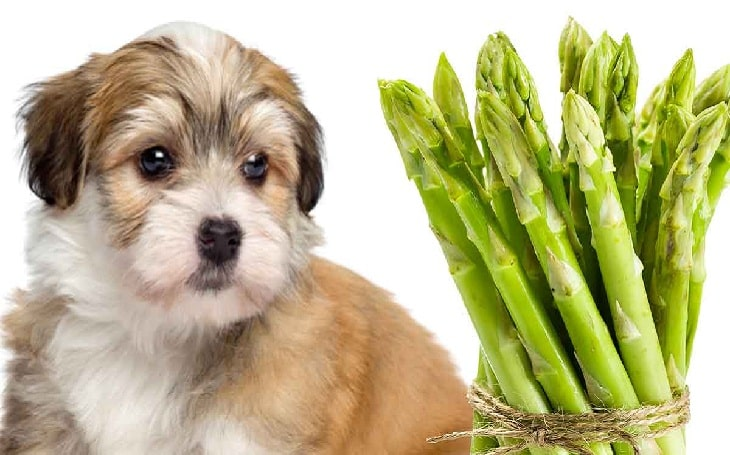 Can dog eat asparagus
