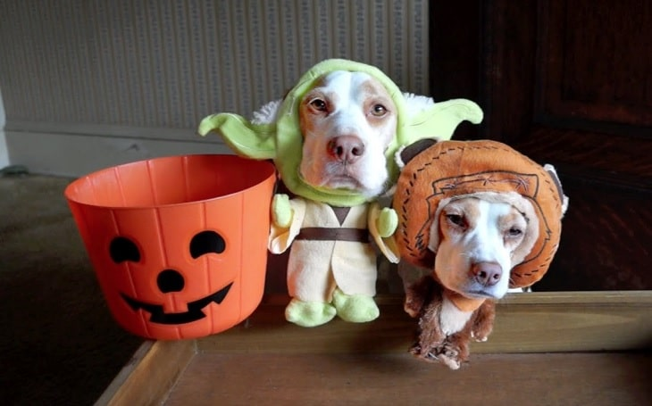 Two cute dogs wearing Halloween costumes.