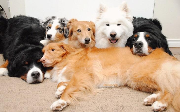10 Cute dogs