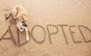 Question to ask before adopting a dog
