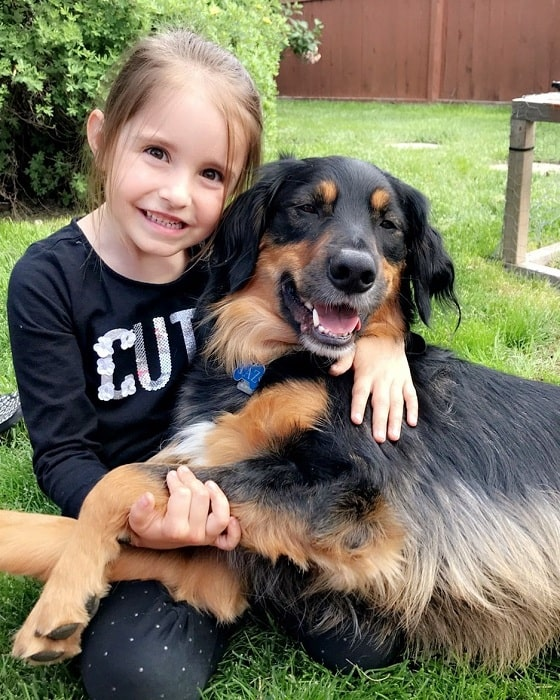 Golden Collie posing with a girl