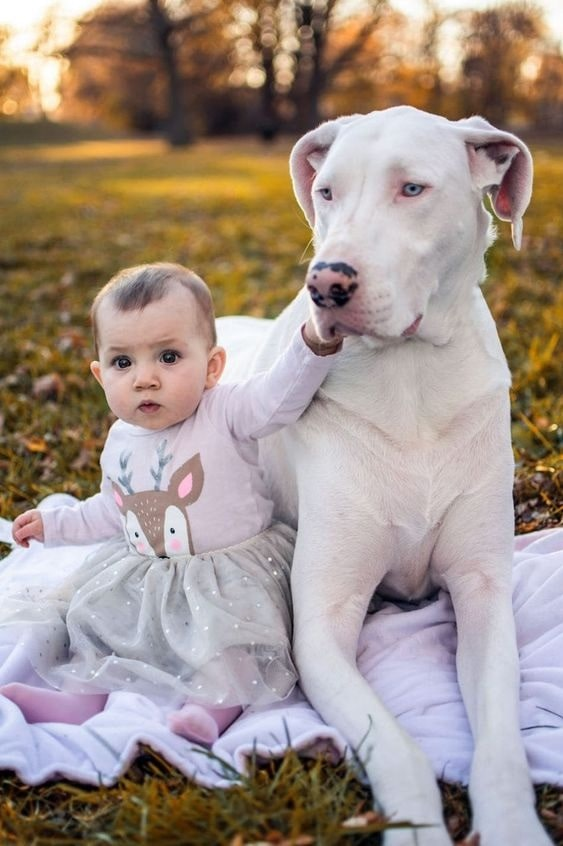 Great Dane with its sister