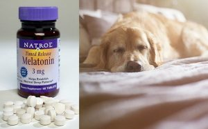 Melatonin uses, side effects, and dosages