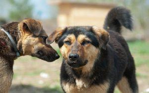 Mongrel dog behavior, training