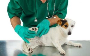 Skin Tags removal cost on dogs