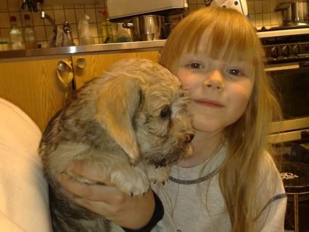 A Dandie Dinmont puppy and a Girl