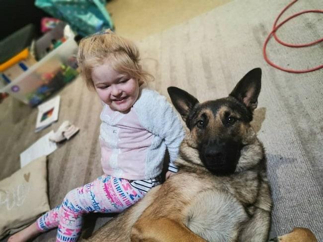 A baby girl and Dutch Shepherd playing