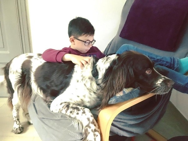 A boy and French Spaniel chilling
