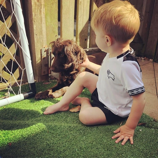 A boy and a Field Spaniel playing