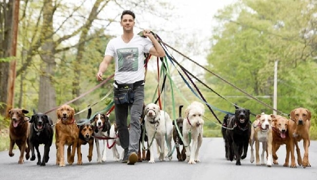 A walker walking dogs