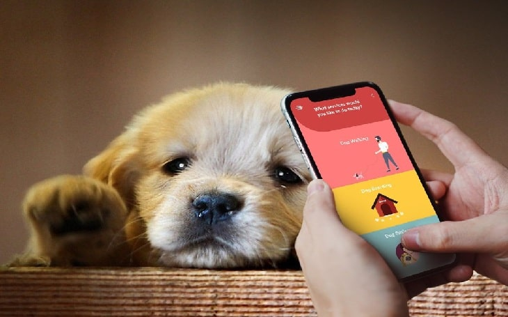 Dog walking and boarding app