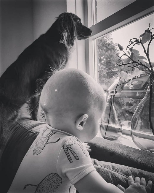German Longhaired Pointer and a baby looking out the window