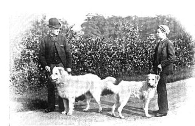 Maremma Sheepdog history