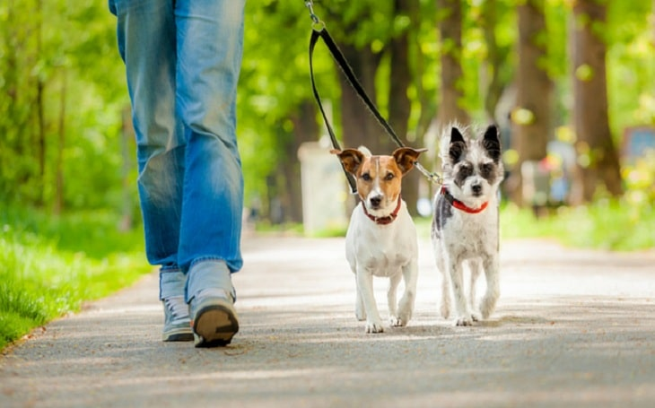 Pet boarding and walking apps