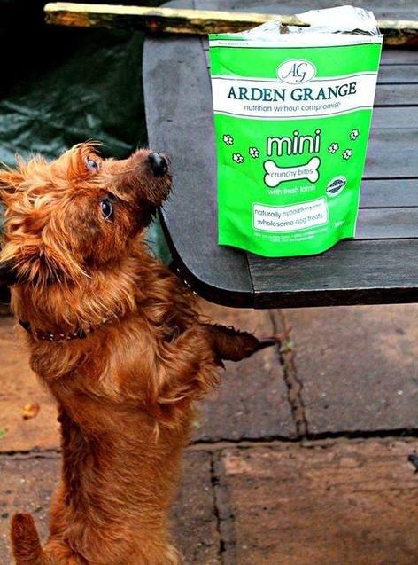 Treats for Australian Terrier
