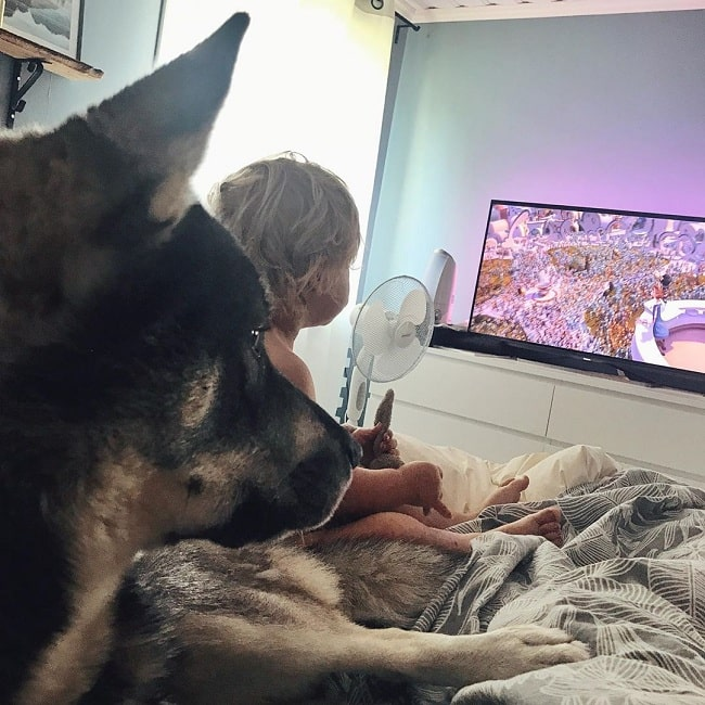 A baby and Swedish Elkhound watching TV