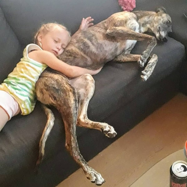 A baby and a Spanish Grayhound taking a nap